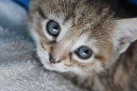 The chaplain's pet kitten