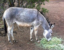 Dead Donkey Raffle – A very funny story, with a good 'gotcha' ending