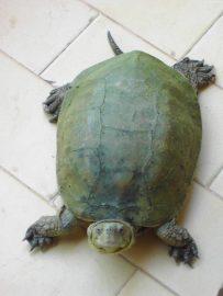 Three Tortoises Go on a Picnic